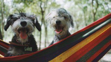 Tinder para animais conecta pets abandonados a possíveis adotantes