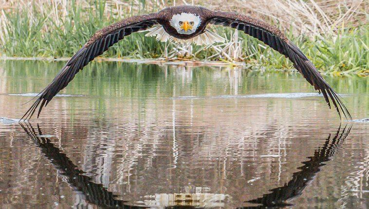 17 fotos incríveis tiradas no momento perfeito