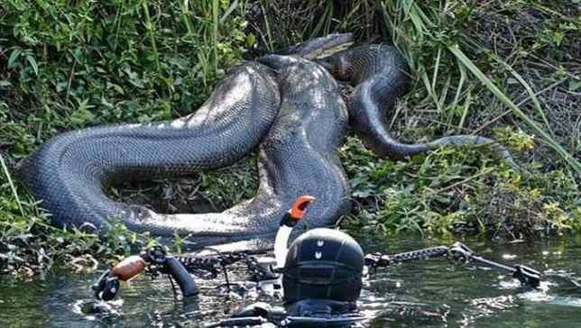 As 10 maiores cobras do mundo