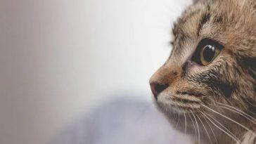 Gato herói salva família de incêndio