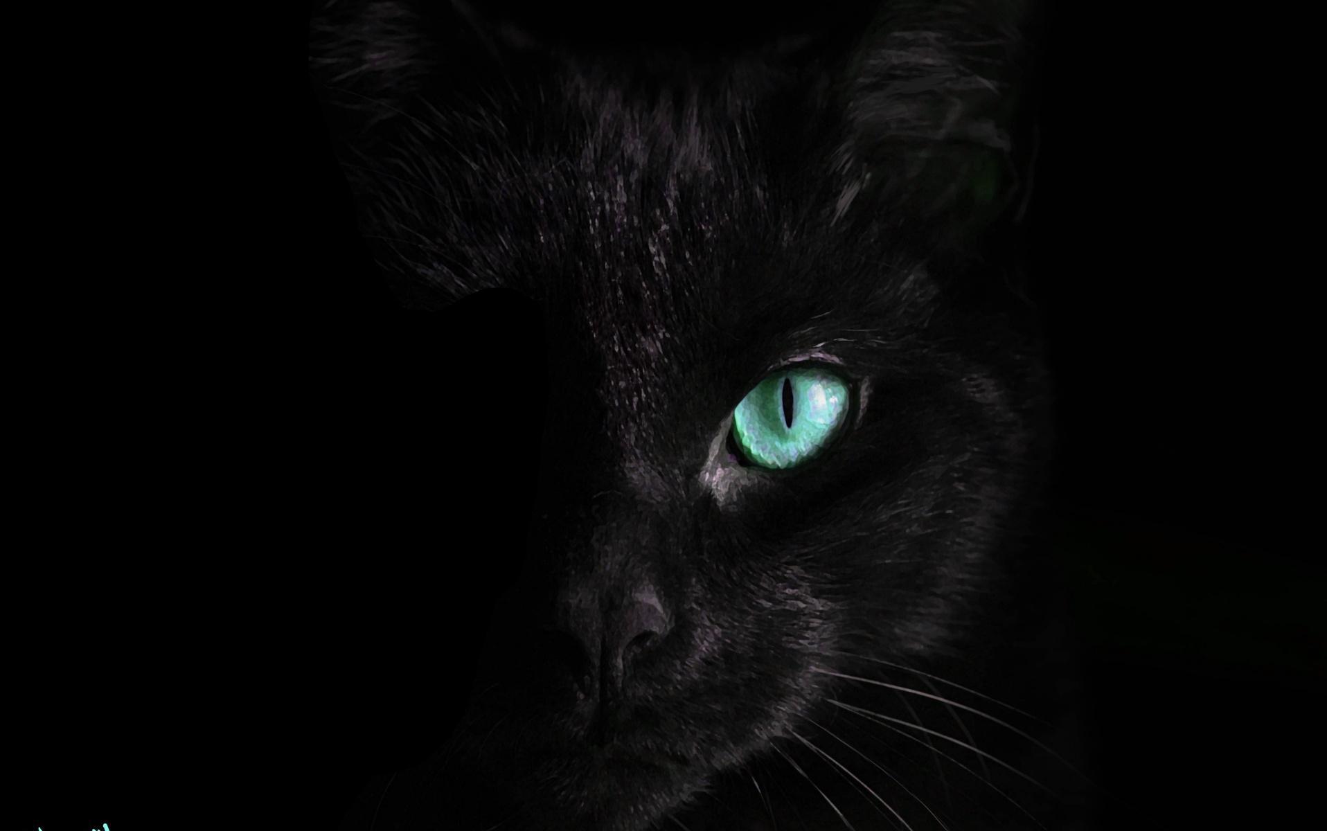 """Gatos pretos deixam de ser adotados por """"não serem fotogênicos"""""""