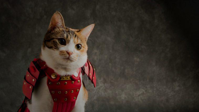 Empresa criou armaduras samurai para gatos e cães