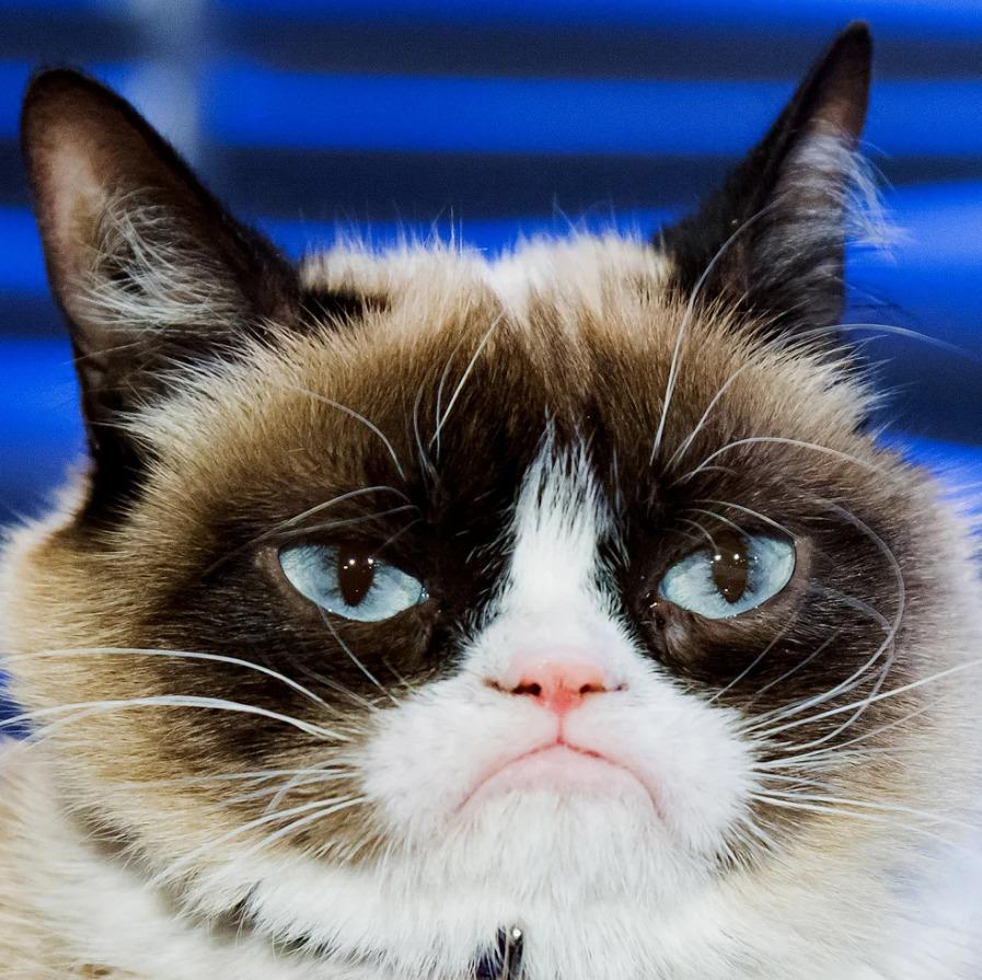 Grumpy Cat ganhou processo milionário que envolve direitos de imagem