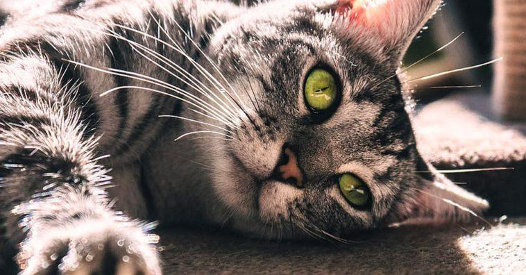 Nova York quer proibir a remoção das unhas dos gatos