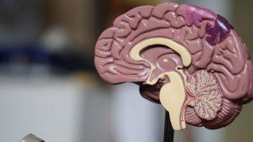 Parkinson – cientistas descobriram que sinais aparecem 20 anos antes