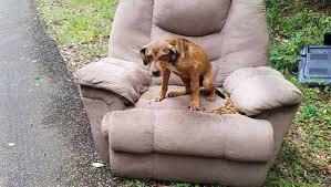 Cãozinho abandonado fica uma semana em cadeira na estrada esperando o dono