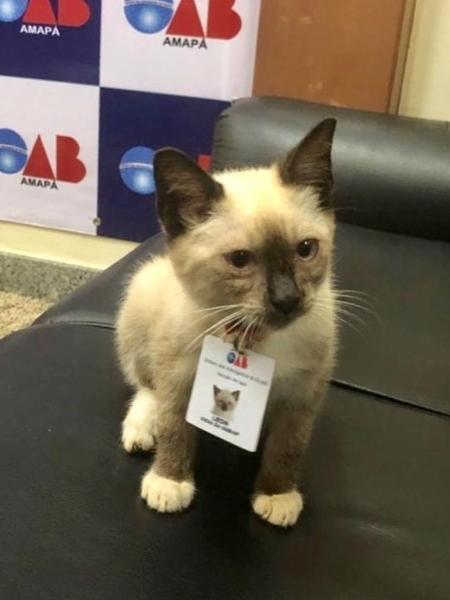 """OAB """"contratou"""" gato adotado"""