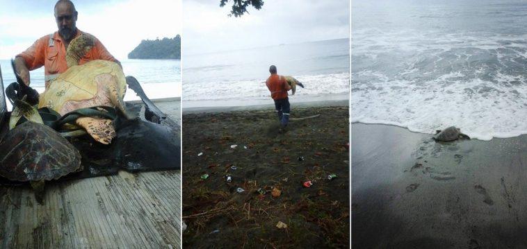Homem salvou tartarugas em mercado e as devolveu ao oceano