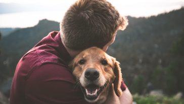 Estudo indica que cães sabem se uma pessoa é desonesta
