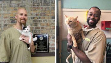 Projeto une gatos abandonados e presidiários e todos saem ganhando