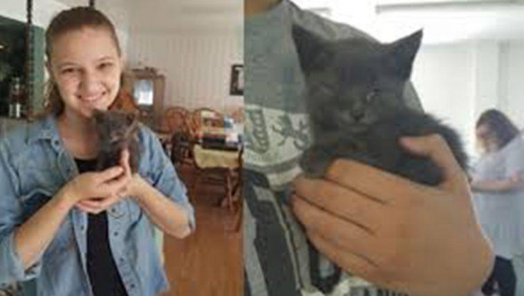 Gatinho foi resgatado por família e fez uma escolha linda fora dos planos