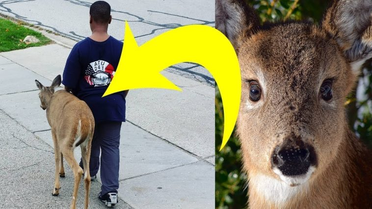 Menino ajuda cervo cego a encontrar comida todos os dias