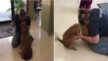 Cadela viu dona pela primeira vez após cirurgia de catarata