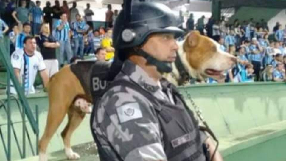 Morre primeiro pit bull da Polícia Militar do Paraná