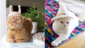 Pelos de gato são usados para fazer chapéus para os próprios gatos