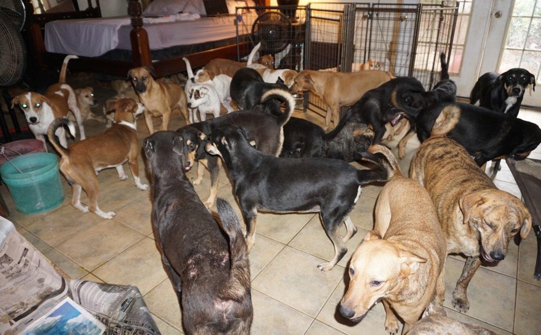 Mulher acolheu quase 100 cães de rua em casa devido a passagem de furacão