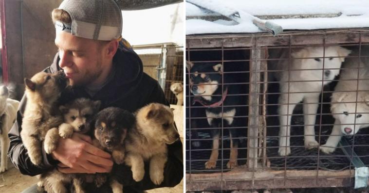 Atleta olímpico salva 90 cães que virariam comida na Coreia do Sul