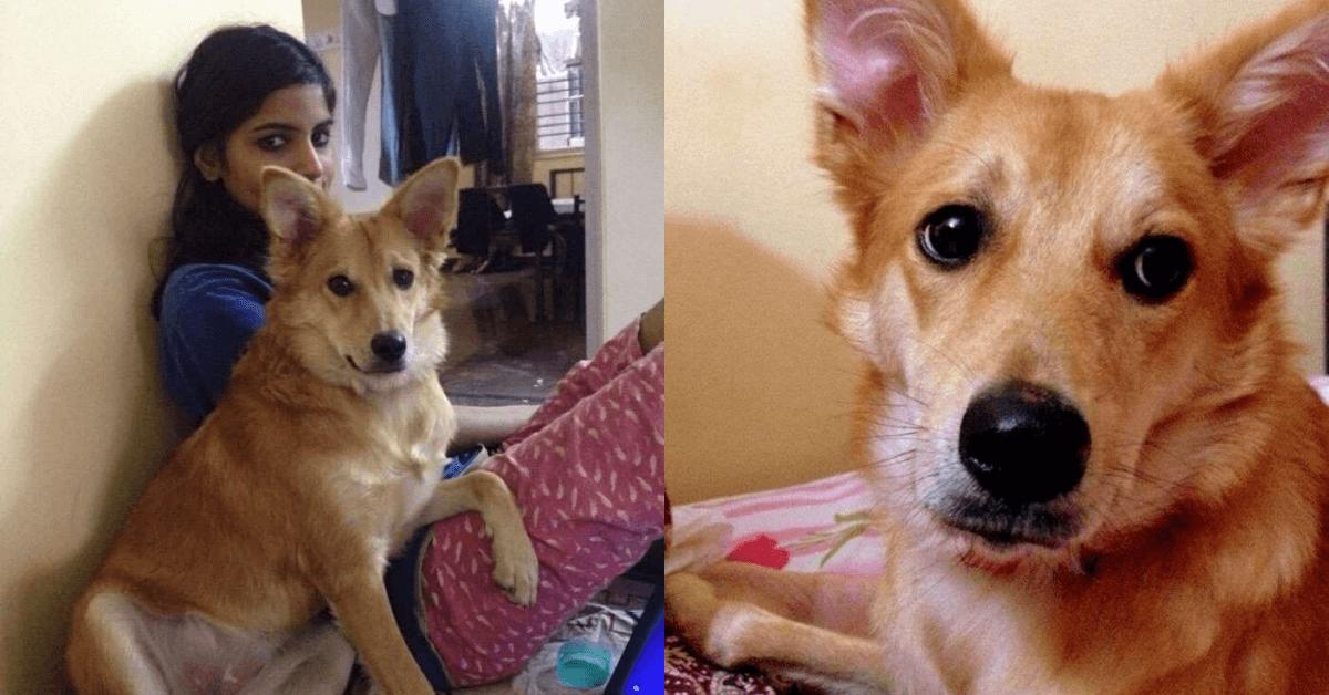 Mulher desistiu do casamento ao descobrir que noivo não gosta de cães