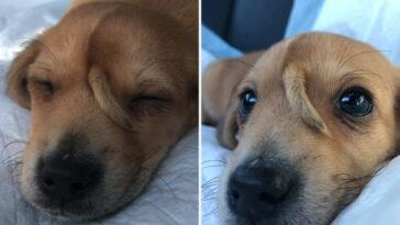Cachorrinho com rabo na testa foi resgatado após ser abandonado