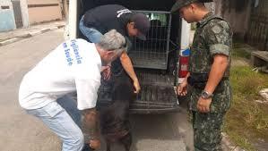 Cachorro em situação de maus-tratos foi resgatado pela polícia após denúncias de vizinhos