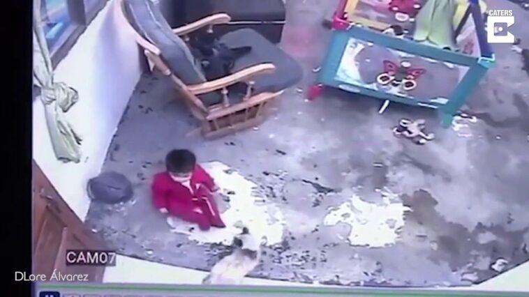 Gato salva bebê que ia cair de escada