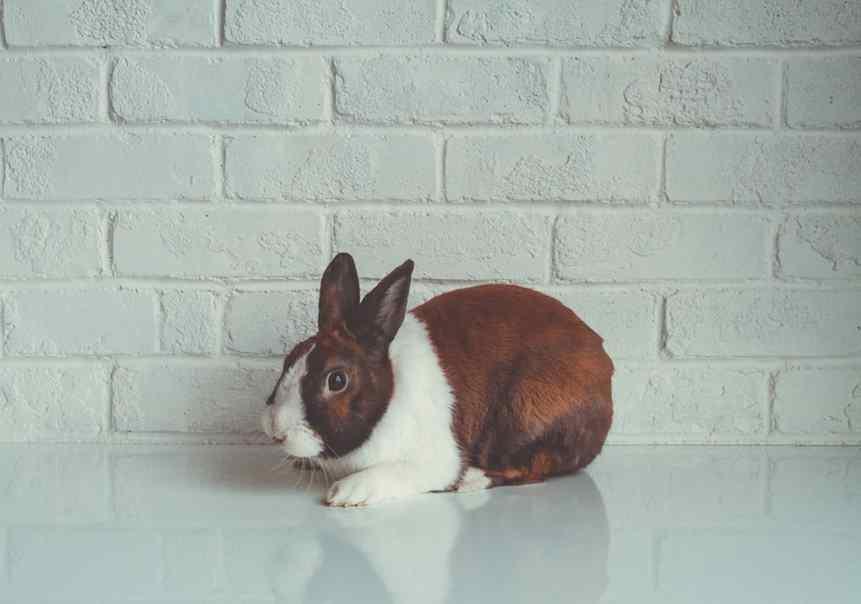 Avon anuncia fim de testes com animais no mundo todo