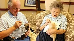 Abrigo de gatos e asilo de idosos se unem para uns cuidarem dos outros