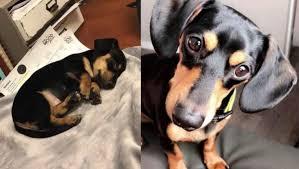 Cão é sacrificado por engano em clínica veterinária