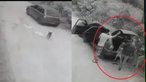 Cão apanha e ainda corre desesperadamente atrás de carro com pessoas que o abandonaram