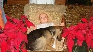 Cão de rua dormindo no colo do Menino Jesus em presépio volta a comover
