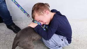 Garotinho teve cãozinho roubado e chora ao reencontrá-lo com ajuda da polícia