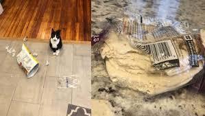 Gato apaixonado por comida humana furta tortilhas e diverte dona com fotos engraçadas
