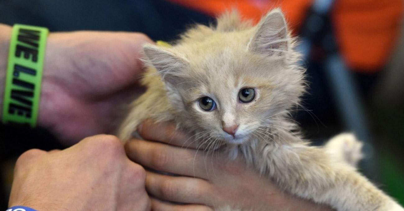 Gatos não podem mais ser cobaias de testes do Departamento de Agricultura dos EUA