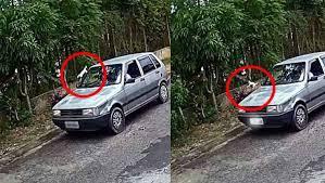 Gatos são jogados pela janela de carro e momento é flagrado por câmera de segurança