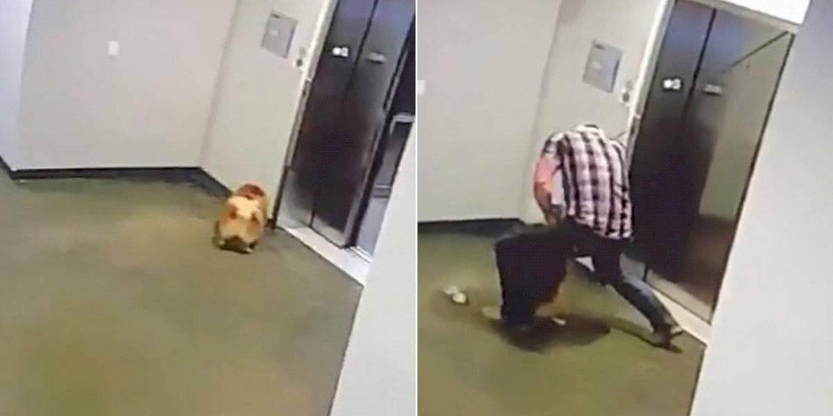 Rapaz salva cão que ficou preso e seria enforcado em elevador (vídeo)
