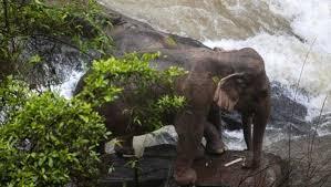 Seis elefantes morrem tentando salvar filhote que caiu em cachoeira