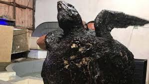 Tartaruga ameaçada de extinção morreu com óleo das narinas ao intestino