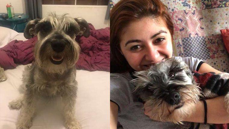Trauma: cãozinho adotado continua economizando ração sem entender que não precisa mais