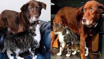 Gato vira guia de cão idoso cego e surdo por amizade