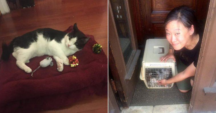 Gato é abandonado na rua com caixa de areia e todos os pertences
