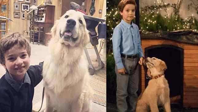 "Morre cachorro da série ""Fuller House"", da Netflix"