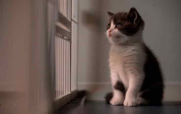 Homem procura empresa de clonagem para ter gatinho morto de volta