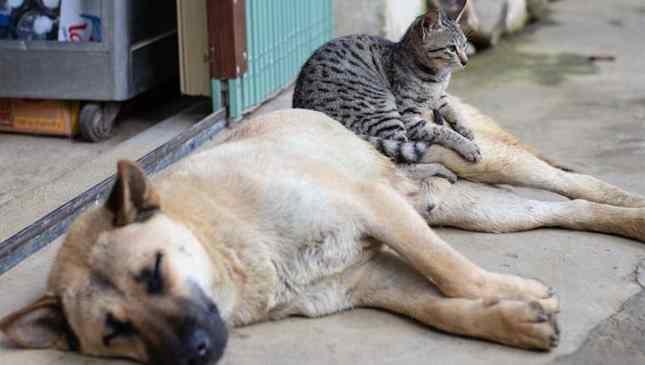 Projeto de penas mais rígidas por maus-tratos a cães e gatos foi aprovado em Comissão na Câmara