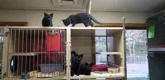 Gatinhos escapam de cela de abrigo e exploram o local com muita bagunça
