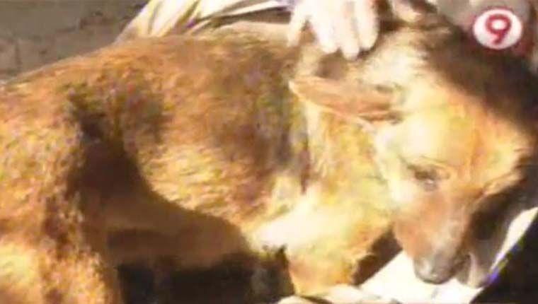 Cadela salvou bebê prematuro abandonado e o juntou a seus filhotes