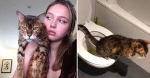 Comportamento dos gatos: Gato aprende a usar banheiro em vez de caixa de areia e tutora fica impressionada