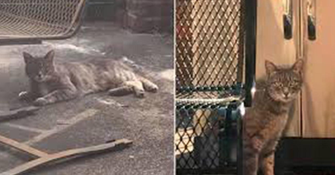Gata visita casa vizinha todos os dias procurando amiga cadela que morreu