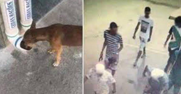 Jovens destruíram comedouro e bebedouro comunitário de animais de rua