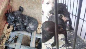 Cães em situação da maus-tratos foram resgatados em operação conjunta entre Polícia Ambiental e Polícia Civil