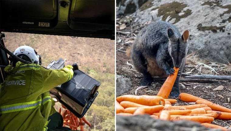 Governo australiano joga alimentos para animais sobreviventes de incêndios usando helicópteros